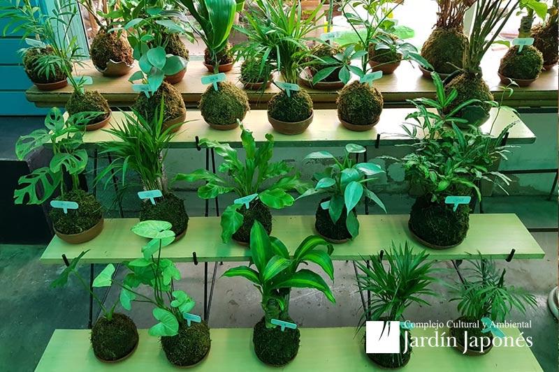 Jardin Japones Vivero
